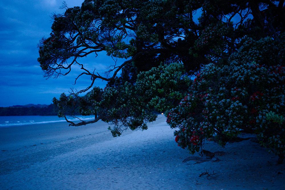Night Sky walk at the beach